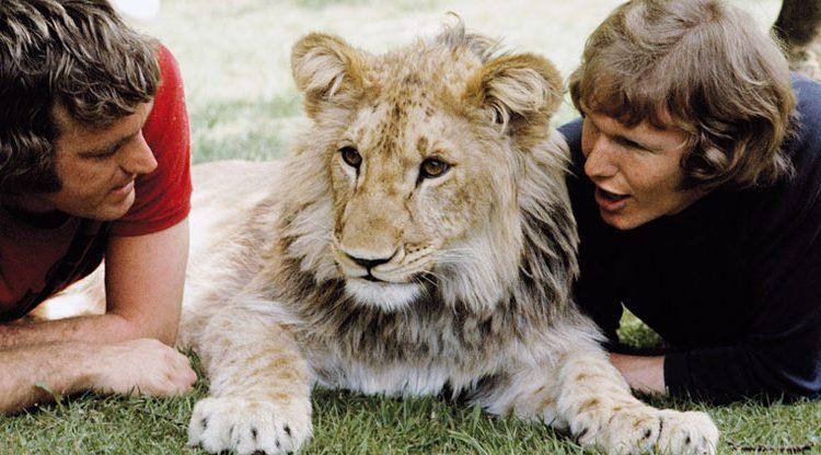 Christian, el león que quiso ser libre