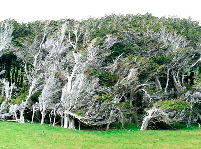 Los árboles del viento
