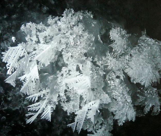 Detalle de una flor de hielo