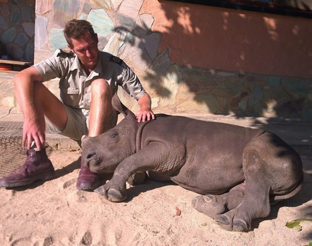 El bebé rinoceronte que no podía dormir solo tras ver cómo unos furtivos asesinaron a su madre