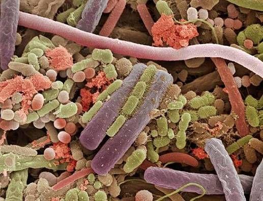 Bacterias en la superficie de una lengua
