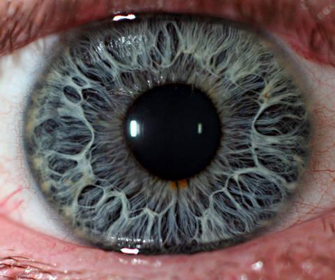 Ojos Ser Humano