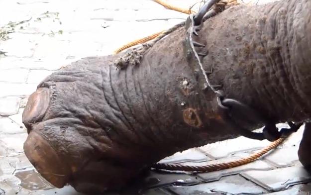 Este elefante ha sido liberado tras 50 años de esclavitud